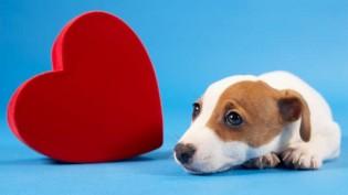 Dicas para prevenir doenças cardíacas em cães e gatos
