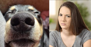 Pesquisa afirma que donos de cães tiram mais fotos de seus pets do que de suas esposas