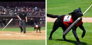 Torcida vaia juiz que foi mal educado com cãozinho durante partida de beisebol (veja o vídeo)