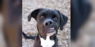 Ninguém queria adotar este cãozinho só por causa da sua boca torta
