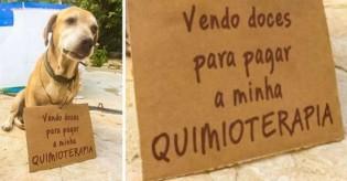 Conheça a história de Deko, cãozinho que vende doces para pagar seu tratamento