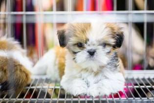 Câmara aprova projeto de lei que proíbe a venda de animais em Santos (SP)