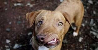 Cachorro abandonado por ter mandíbula desfigurada tem nova chance de ser feliz