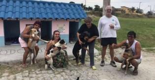 Moradores de Cabo Frio criam 'cãodomínio' para abrigar cachorros de rua