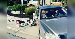 Vingança: cachorro deixado sozinho dentro de carro liga ele e o joga contra parede