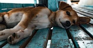 Prefeitura dá desconto no IPTU para quem adotar cão de rua