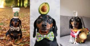 Cãozinho se torna famoso no Instagram por equilibrar objetos com a cabeça; veja fotos