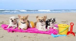 6 cuidados para curtir o verão com seu pet