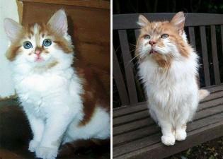 Rubble, o gato mais velho do mundo completou 30 anos