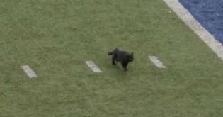 Gatinho preto invade campo de futebol e leva público ao delírio - veja o vídeo