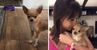 Cão doente que foi o último a ser adotado em pet shop se torna protagonista de casamento em SP
