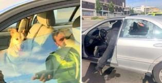 Cão deixado preso em carro é salvo por policial e dono 'enlouquece'