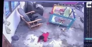 Gato salva bebê que iria cair de escada na Colômbia; veja o vídeo