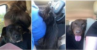 Mulher vai em abrigo para adotar um cachorro e acaba saindo de lá com três!