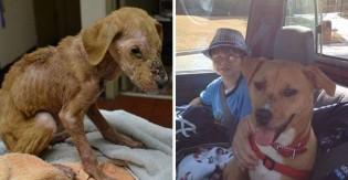 Cão curado de estado grave de desnutrição muda extremamente vida de criança solitária