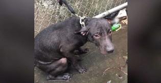 Policial salva e adota cão que vivia sob extremos maus-tratos e vira ativista da causa animal