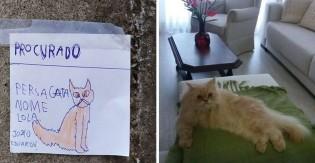 Pura emoção: Criança faz cartazes à mão para encontrar sua gata e mobiliza comunidade em SC (veja o vídeo)