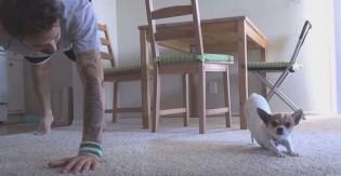 Cãozinho Chihuahua faz Yoga com seu dono em vídeo viral; assista!