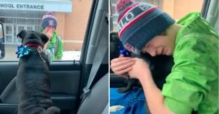 Menino que adoeceu após perder seu cão pug vai aos pratos em surpresa de reencontro