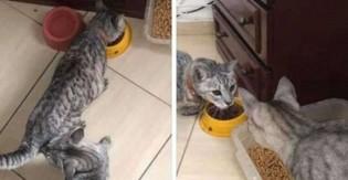 Falsidade 'gateológica': jovem pensa que perdeu gato, acha outro parecido e acaba com dois em casa