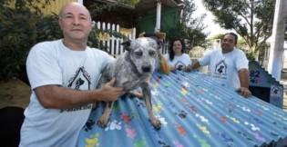 """Cães de rua de cidade gaúcha são agraciados com casinhas: """"Quem olha para elas verá que são feitas com muito amor"""""""