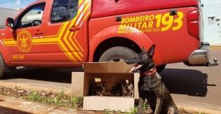 Em 1º dia de treinamento, cão-bombeiro encontra 5 gatos abandonados em caixa de papelão