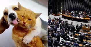 Aumento de pena por maus-tratos a cães e gatos é aprovado em Comissão na Câmara