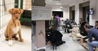 Ideia mais que fofa: sócios do ramo de café criam espaço para adoção do pets em seu estabelecimento