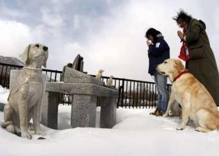Conheça o asilo especial que abriga 200 cães-guias aposentados no Japão