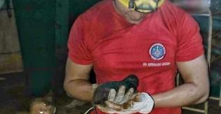 Cada minuto foi crucial: Bombeiros salvam filhote que corria risco de afogamento em encanamento