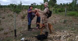 Cão farejador experiente ajuda a encontrar homem de idade avançada perdido em zona rural