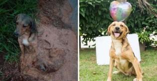 Final feliz: Cães flagrados protegendo um ao outro em temporal são adotados