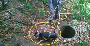 Bombeiros de MG resgatam cão que caiu em fosso: 'Chorou a noite toda'
