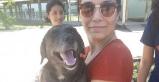 Cão com câncer que vive em universidade ganha tratamento custeado com venda de doces por estudantes