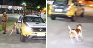 Melhor amigo do homem: cão vira-lata chora ao ver dono ser levado por carro da polícia