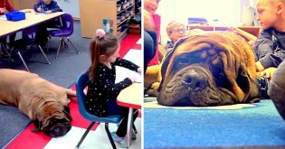 Cão terapeuta melhora comportamento de crianças que aprendem sobre responsabilidade em escola