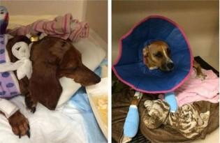 Cachorros sobrevivem milagrosamente a grave acidente de carro que vitimou sua dona