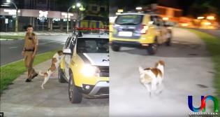 Cachorro que teve seu dono levado em viatura reencontra seu melhor amigo