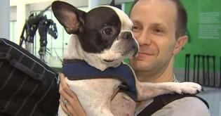 Piloto muda rota de vôo para salvar vida de cachorro buldogue francês