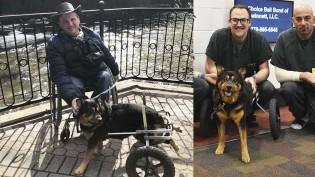 Cadeirante adota cachorro com deficiência abandonado por 4 famílias diferentes
