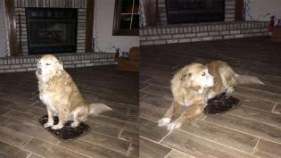 Dona erra tamanho de cama para cão e bichano usa mesmo assim para não magoá-la