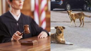 Juíza de cidade do Goiás determina criação de abrigo para animais abandonados
