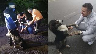 Cachorro de rua encontra ciclista ferido preso entre montanhas e corre em busca de ajuda
