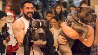 Youtuber leva cão da raça american bully passear em shopping e filma reação das pessoas