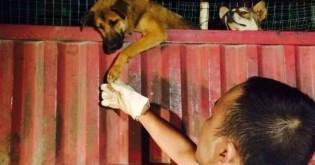 Cachorro agradece socorrista que o salvou de destino horrível na China