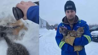 Usando café quente, homem salva gatos que estavam com rabos congelados na neve