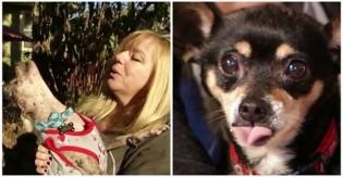 Professora aposentada transforma casa em abrigo para cães idosos: 'Merecem descansar'