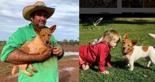 Cão protege menina de forte enchente na Austrália: 'Salvou a vida dela'