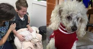 Menino chora antes de sua cachorra ser sacrificada e comove a internet