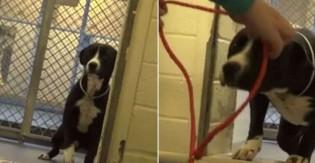 De chorar: Assista ao exato momento em que esse cãozinho descobre que será adotado